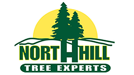 north hill tree experts